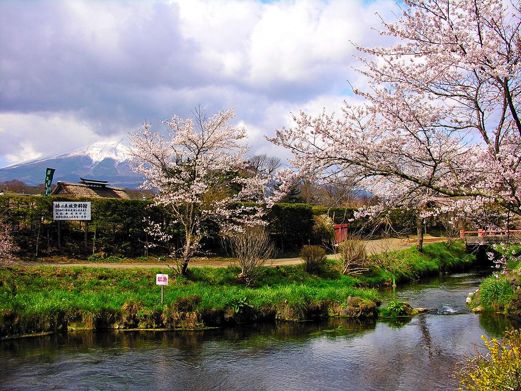 Immagini sakura studiare da giapponese for Finestra giapponese