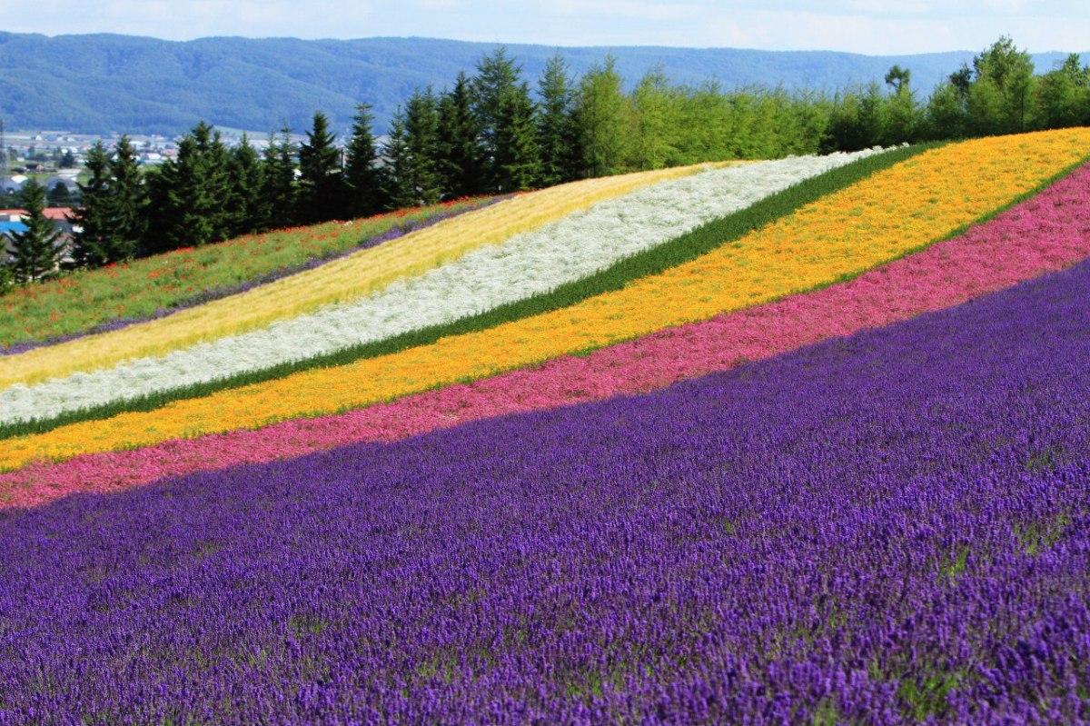 I campi di Furano