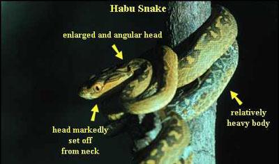Habu-Viper