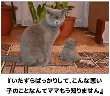 mou shirimasen (3)