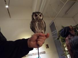 owls-44