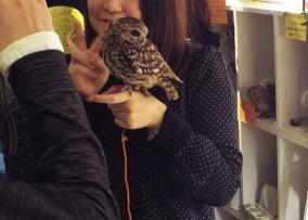 owls-45