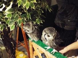 owls-47