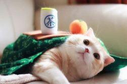 Dopo letto e futon non può mancare il kotatsu.