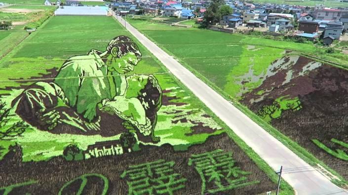 0 risposta giapponese ai cerchi nel grano pivelli la Tanbo art arte con i campi di riso