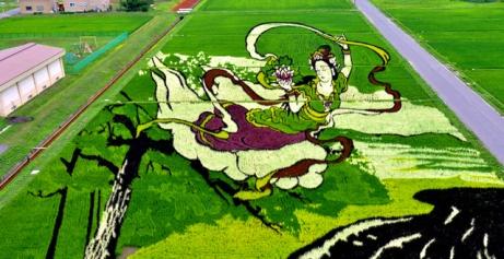 risposta giapponese ai cerchi nel grano pivelli la Tanbo art arte con i campi di riso (10)