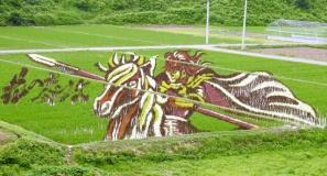 risposta giapponese ai cerchi nel grano pivelli la Tanbo art arte con i campi di riso (11)