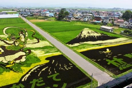 risposta giapponese ai cerchi nel grano pivelli la Tanbo art arte con i campi di riso (13)