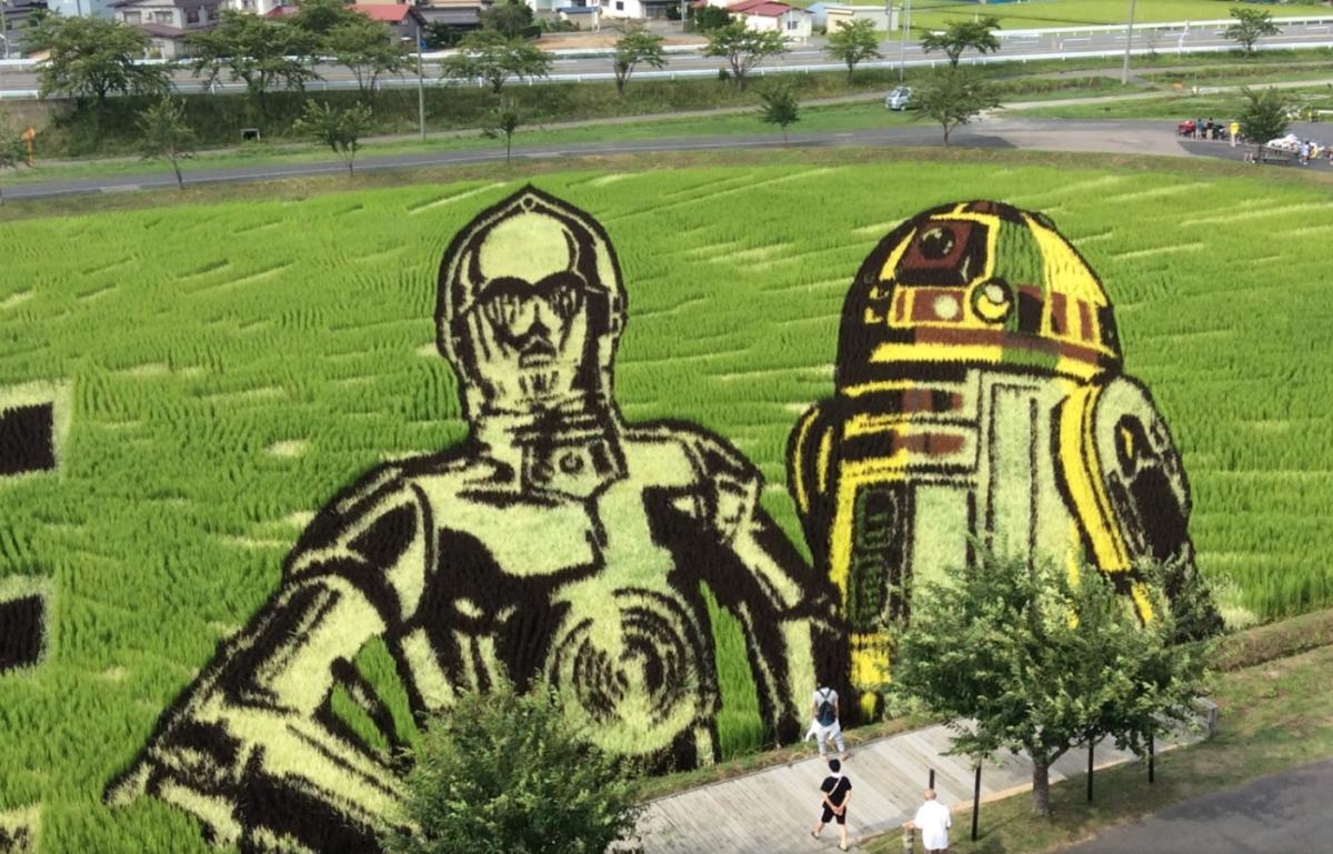 risposta giapponese ai cerchi nel grano pivelli la Tanbo art arte con i campi di riso (16)