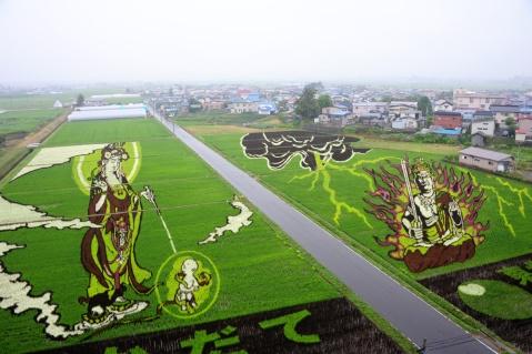 risposta giapponese ai cerchi nel grano pivelli la Tanbo art arte con i campi di riso (4)