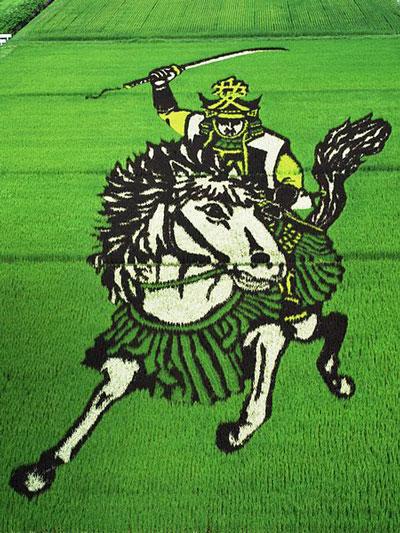 risposta giapponese ai cerchi nel grano pivelli la Tanbo art arte con i campi di riso (9)